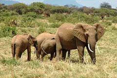 Kasigau Wildlife Corridor, Kenya